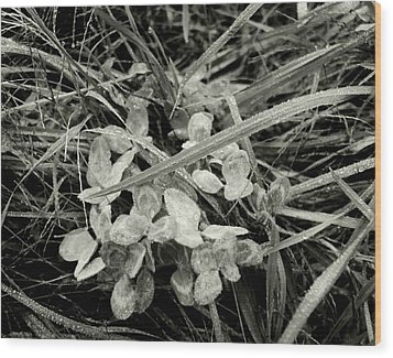 'plant And Grass With Dewdrops' Wood Print