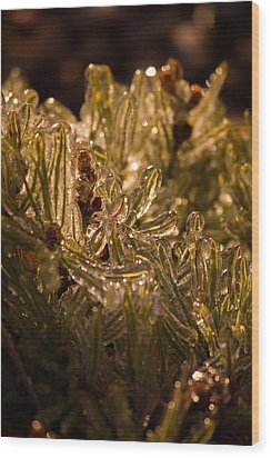 Wood Print featuring the photograph Plant Covered In Ice by Dave Garner