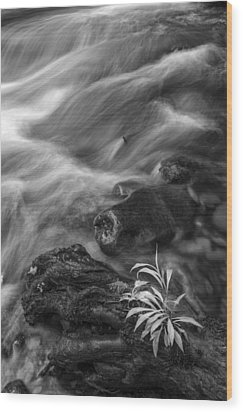 Little Plant Wood Print by Jon Glaser