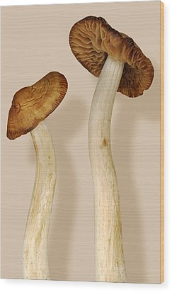 Plant - Mushrooms - I'm So Proud Of My Daughter Wood Print by Mike Savad