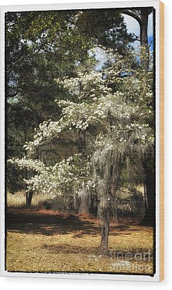 Plantation Tree Wood Print by John Rizzuto