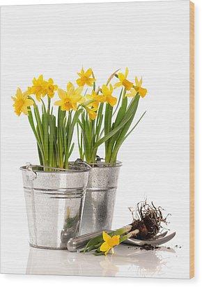 Planting Bulbs Wood Print by Amanda Elwell