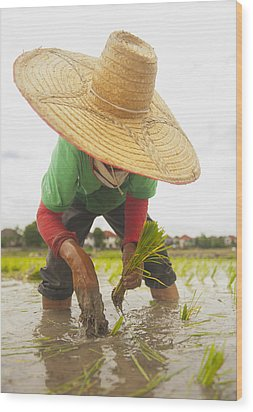 Planting New Ricechiang Mai Thailand Wood Print by Stuart Corlett