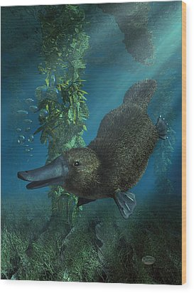 Platypus Wood Print by Daniel Eskridge