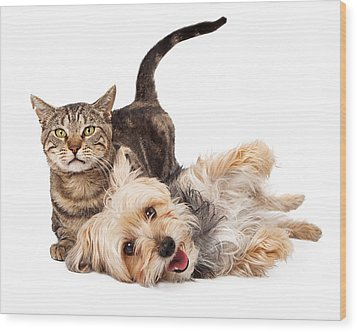 Playful Dog And Cat Laying Together Wood Print