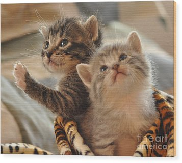 Playful Kittens Wood Print