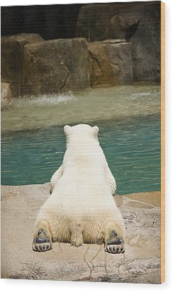 Playful Polar Bear Wood Print by Adam Romanowicz