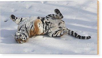 Playful Tiger Wood Print