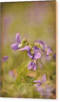 Playful Wild Violets Wood Print by Lois Bryan