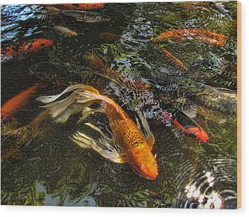 Playing Koi With Me Wood Print by Shannon Story