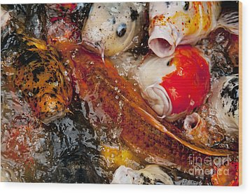 Wood Print featuring the photograph Please Feed Us  by Wilma  Birdwell