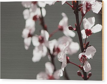 Plum Blossom II Wood Print by Peter Tellone