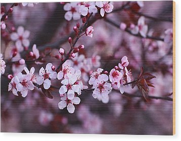 Wood Print featuring the photograph Plum Blossoms by Lynn Hopwood