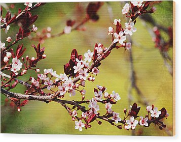 Wood Print featuring the photograph Plum Blossoms by Trina  Ansel