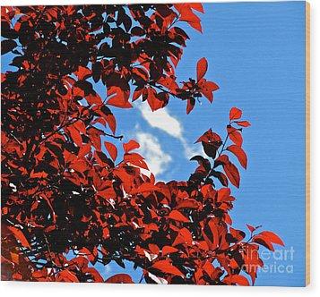 Plum Tree Cloudy Blue Sky 1 Wood Print by CML Brown