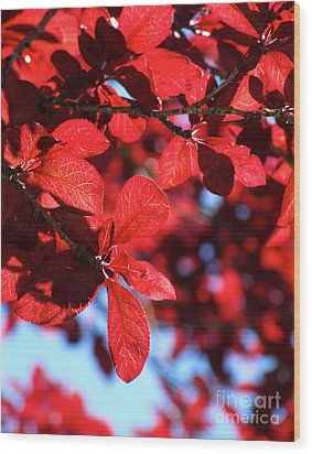 Wood Print featuring the photograph Plum Tree Cloudy Blue Sky 2 by CML Brown