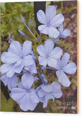 Plumbago Auriculata Or Cape Wort Wood Print by Rod Ismay