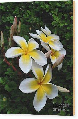 Plumeria In The Sunshine Wood Print by Kaye Menner