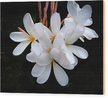 Plumeria Wood Print by Penny Lisowski