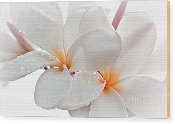 Plumeria Wood Print by Roselynne Broussard