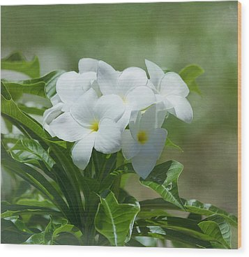 Plumeria - Tropical Flowers Wood Print by Kim Hojnacki