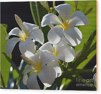 Wood Print featuring the photograph Plumeria's IIi by Robert Meanor