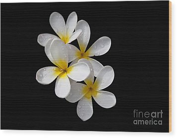 Wood Print featuring the photograph Plumerias Isolated On Black Background by David Millenheft