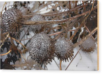 Pods In Ice Wood Print