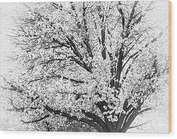 Wood Print featuring the photograph Poetry Tree by Roselynne Broussard
