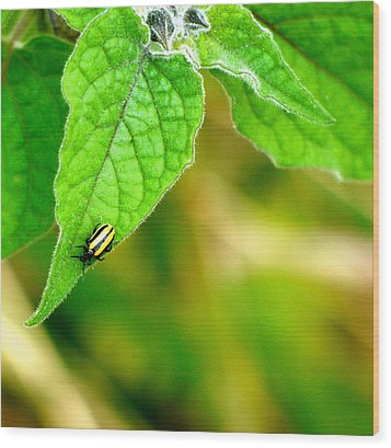 Wood Print featuring the photograph Poha Berry Beetle by Lehua Pekelo-Stearns