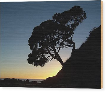 Wood Print featuring the photograph Pohutukawa Trees At Sunrise by Peter Mooyman