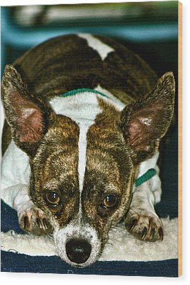 Wood Print featuring the photograph Poi The Chihuahua Terrier by Lehua Pekelo-Stearns