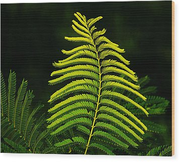 Wood Print featuring the photograph Poinciana Leaf by Lorenzo Cassina