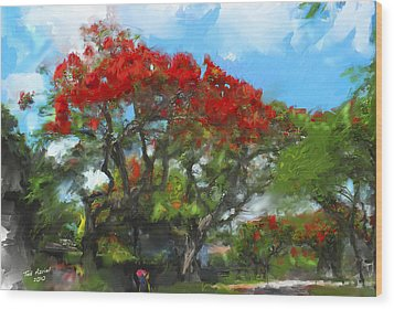 Wood Print featuring the painting Poinciana Trees Of Coral Gables by Ted Azriel