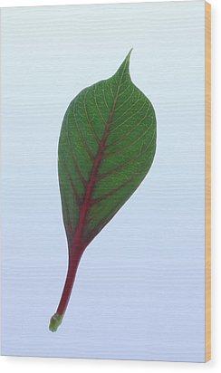 Poinsettia Leaf Wood Print by Richard Stephen