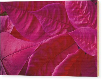 Poinsettia Leaves 1 Wood Print by Rich Franco