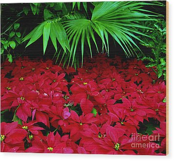 Wood Print featuring the photograph Poinsettias And Palm by Tom Brickhouse