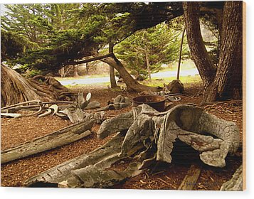 Point Lobos Whalers Cove Whale Bones Wood Print by Barbara Snyder