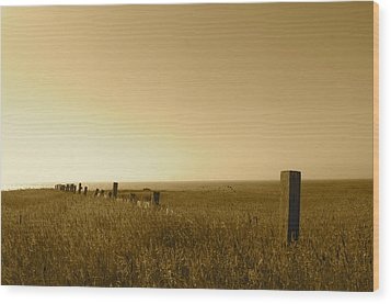 Point Reyes Field Wood Print by Colleen Renshaw