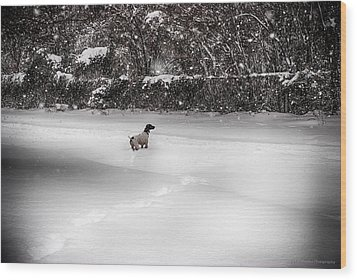 Wood Print featuring the photograph Pointer In The Storm by Phil Abrams