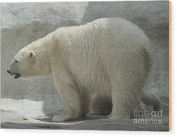 Polar Bear 1 Wood Print