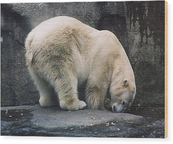 Wood Print featuring the photograph Polar Bear At Zoo by Myrna Walsh