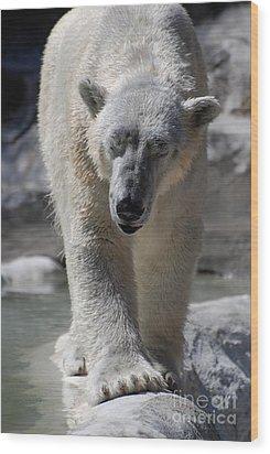 Polar Bear Balance Wood Print by DejaVu Designs