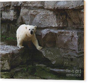 Wood Print featuring the photograph Polar Bear Cub by Tom Brickhouse