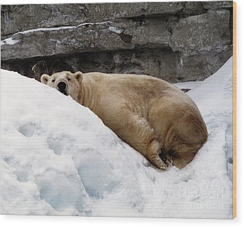 Wood Print featuring the photograph Polar Bear Looking by Tom Brickhouse