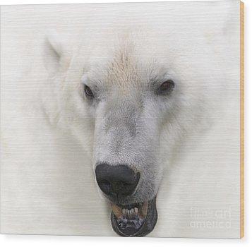 Polar Bear Portrait Wood Print by Heiko Koehrer-Wagner