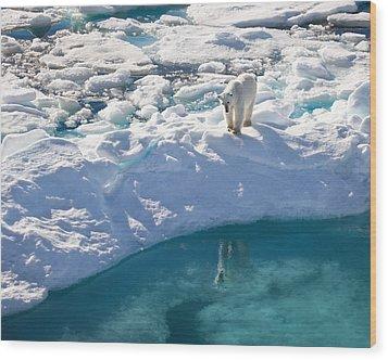 Polar Bear Reflection Wood Print