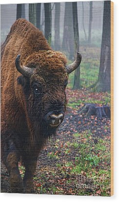 Polish Bison Wood Print by Mariola Bitner