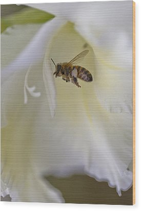 Pollen Carrier Bee Wood Print by Maj Seda