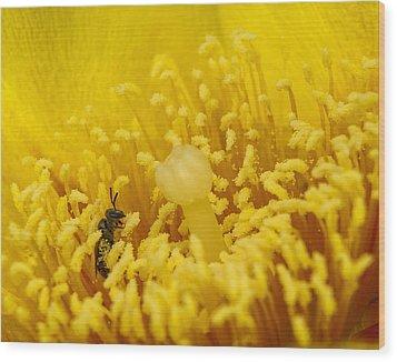 Pollen Forest Wood Print by Len Romanick